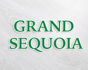 GRAND SEQUOIA